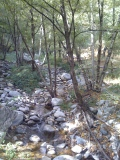 More nature